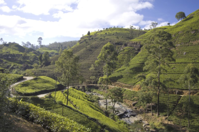 The Tea Mountains, Sri Lanka